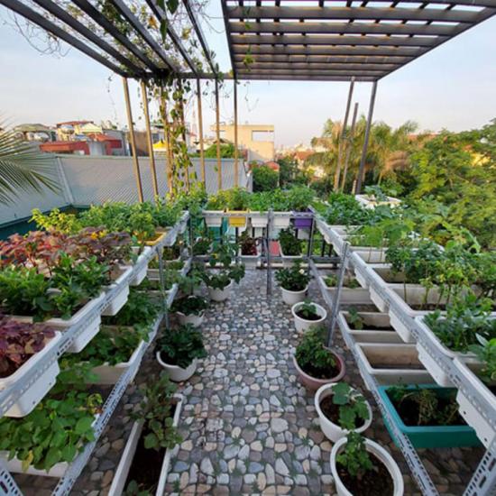 Bán chậu nhựa trồng rau chuyên dụng
